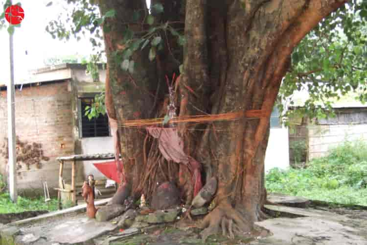 peepal tree benefits