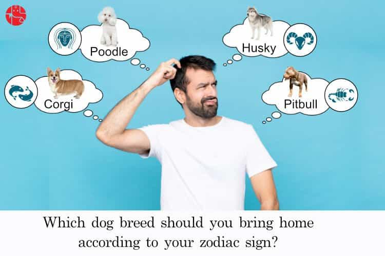 Which zodiac signs go best together