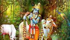 Know About Janmashtami And How Should The People...
